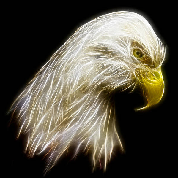 Wall Art - Photograph - Bald Eagle Fractal by Adam Romanowicz