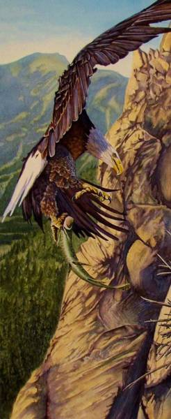 Painting - Bald Eagle by Greg and Linda Halom