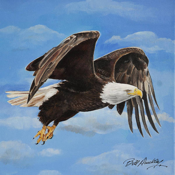 Wall Art - Painting - Bald Eagle In Flight by Bill Dunkley