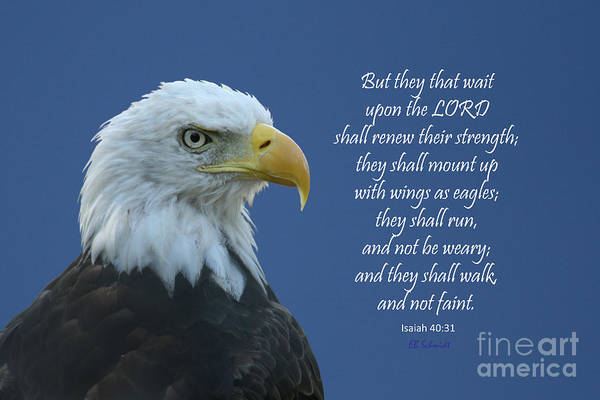 Photograph - Bald Eagle - Isaiah 40 by E B Schmidt