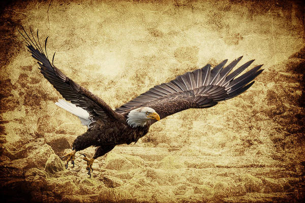 Photograph - Bald Eagle Lift Off by Wes and Dotty Weber