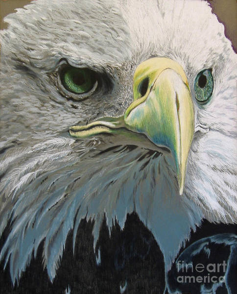 Drawing - Sold Bald Eagle by Nancy  Parsons