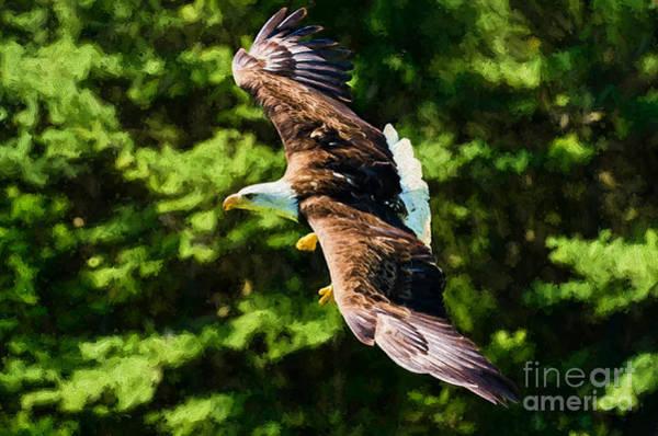 Photograph - Bald Eagle - Painterly by Les Palenik