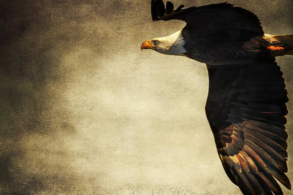 Photograph - Bald Eagle With Texture by Eleanor Abramson