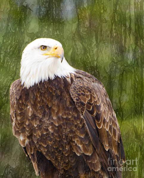 Photograph - Bald Eagle - With Texture by Les Palenik