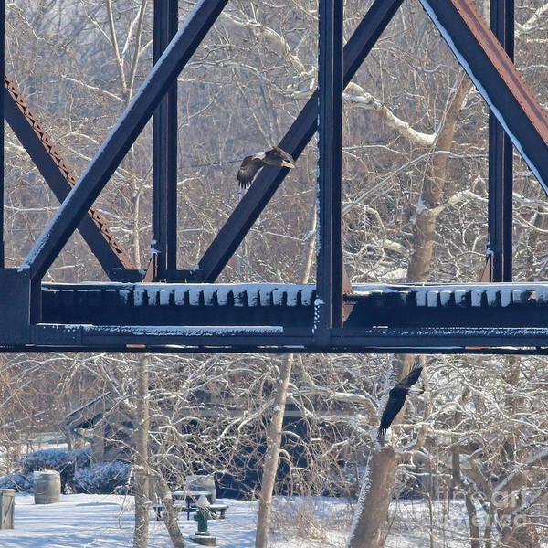 Wall Art - Photograph - Bald Eagles At Railroad Bridge 8841 by Jack Schultz