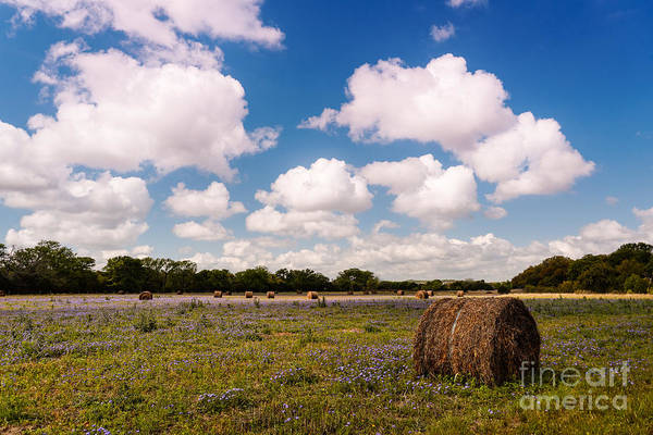 Hay Bale Wall Art - Photograph - Bales Of Hale - Quintessential Texas Hill Country - Luckenback by Silvio Ligutti