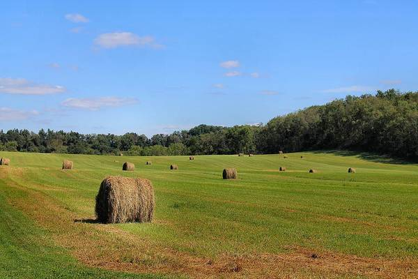 Photograph - Bales Of Hay by Angela Murdock