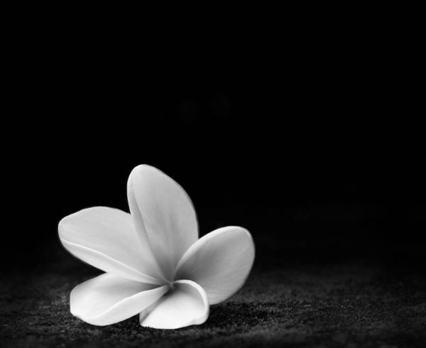 Photograph - Bali Frangipani by Julian Cook