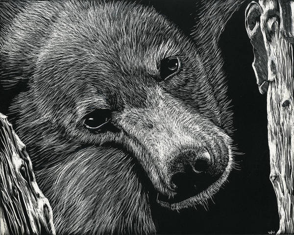 Drawing - Baloo by William Underwood