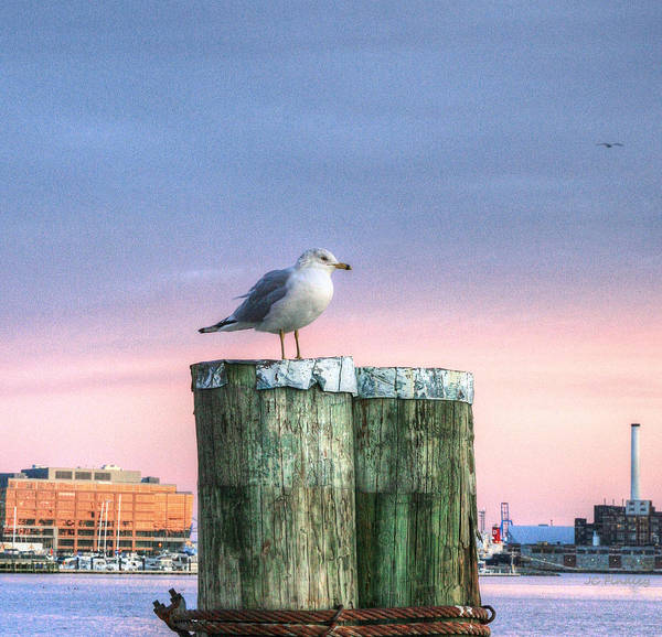 Photograph - Baltimore City Purple Sunset by JC Findley