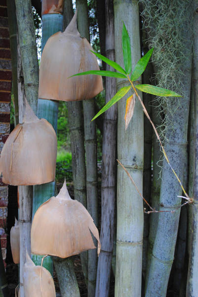 Photograph - Bamboo Bells by George D Gordon III