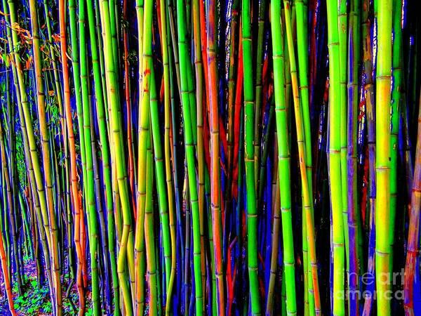 Wall Art - Photograph - Bamboo Dream by Ed Weidman