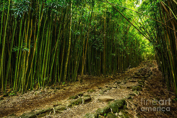 Bamboo Photograph - Bamboo Forest by Jamie Pham