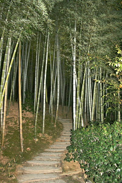 Photograph - Bamboo Forest Pathway by Angela Bushman