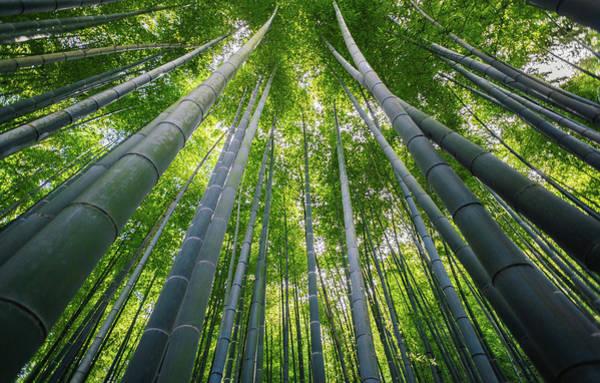 Kamakura Wall Art - Photograph - Bamboo Forest by Photography By Martin Irwin