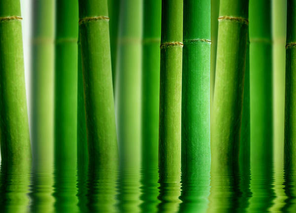 Green Vegetable Photograph - Bamboo Forest With Water Reflection by Aged Pixel