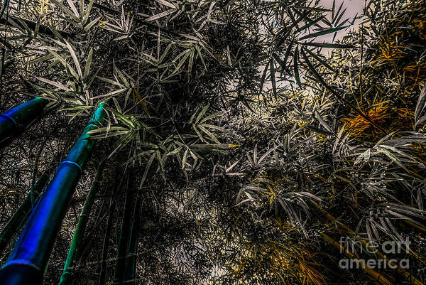 Photograph - bamboo III - blue - yellow by Hannes Cmarits