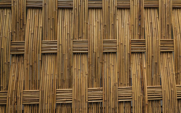 Photograph - Bamboo by Jacqui Boonstra