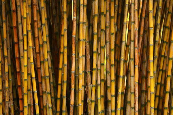 Photograph - Bamboo by Jacqui Collett