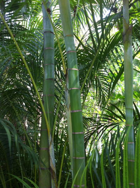 Photograph - Bamboo Lookout by Angela Bushman