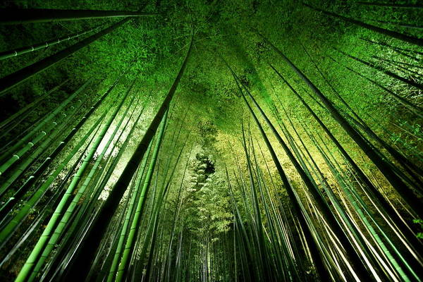 Ceiling Photograph - Bamboo Night by Takeshi Marumoto