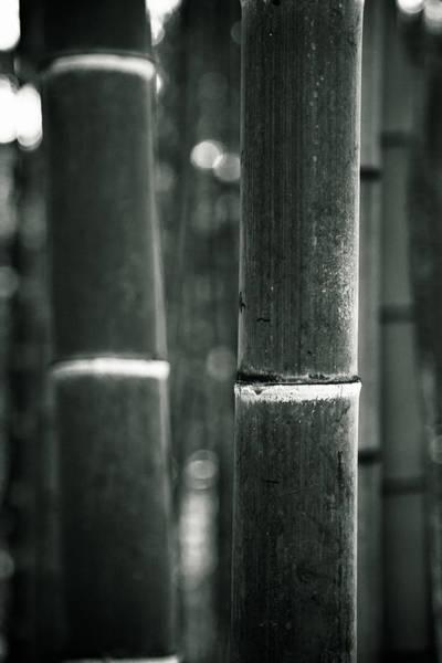 Photograph - Bamboo Noir by Brad Brizek