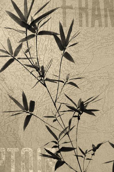Chinese New Year Photograph - Bamboo Poesy by Jenny Rainbow