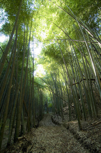 Bamboo Road Art Print by Aaron Bedell
