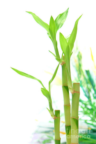 Bamboo Photograph - Bamboo Stems And Leaves by Olivier Le Queinec