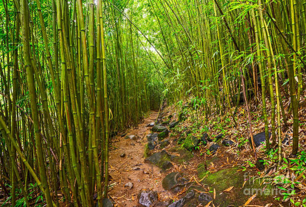 Bamboo Photograph - Bamboo Trail - Maui by Jamie Pham