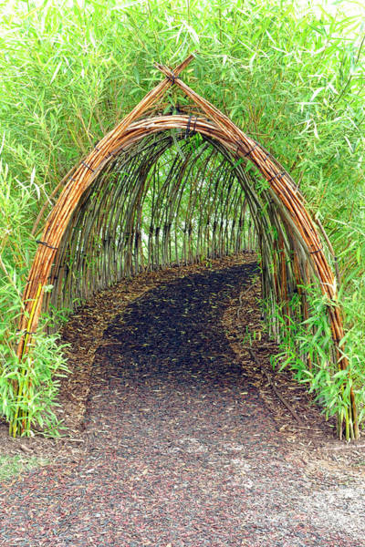 Wall Art - Photograph - Bamboo Tunnel by Olivier Le Queinec