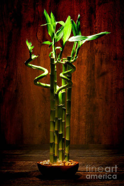 Wall Art - Photograph - Bambooesque  by Olivier Le Queinec