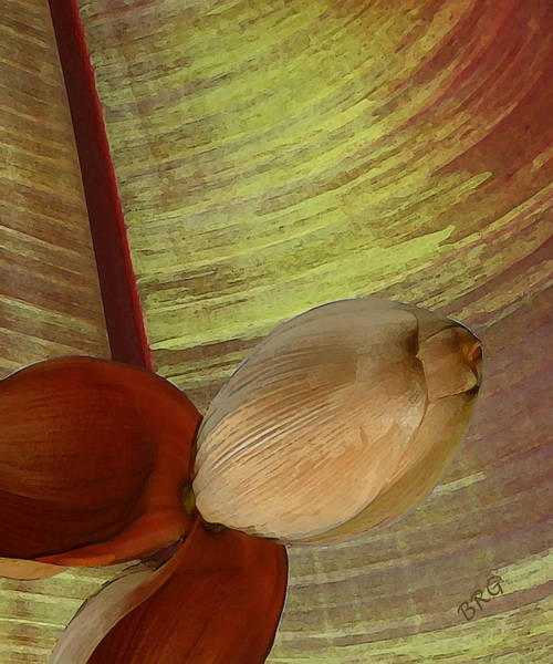 Earthtones Photograph - Banana Composition I by Ben and Raisa Gertsberg