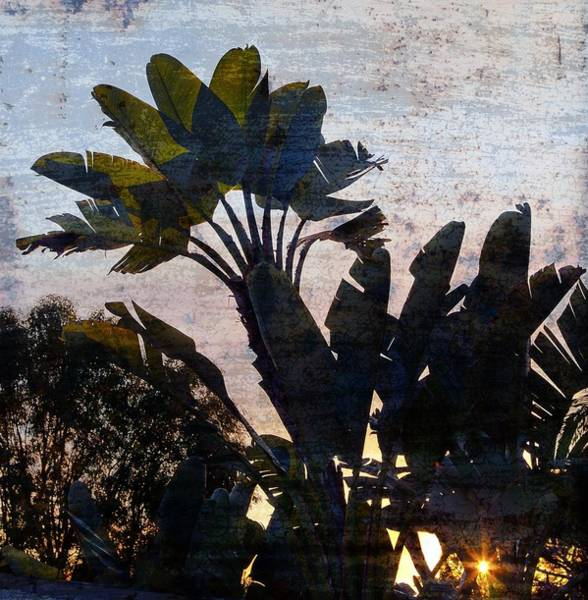 Barb Photograph - Banana Palms by Gilbert Artiaga
