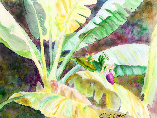 Painting - Banana Tree by C Sitton