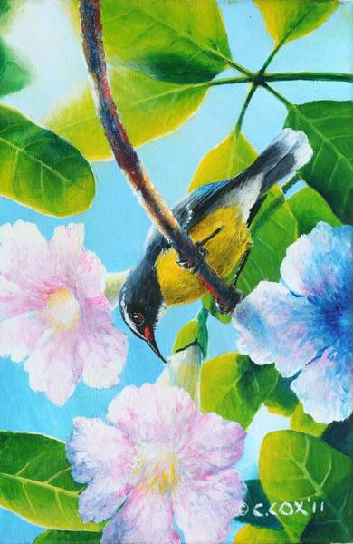 Painting - Bananaquit And White Cedar by Christopher Cox