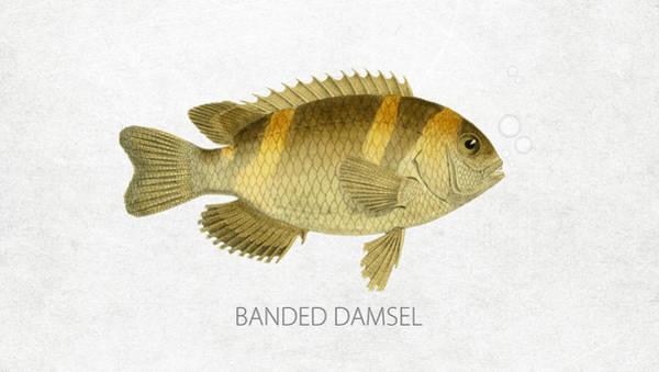 Wall Art - Digital Art - Banded Damsel by Aged Pixel