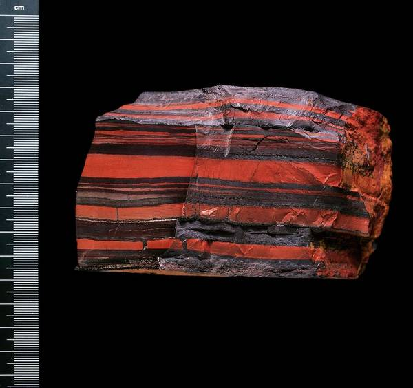Bif Photograph - Banded Iron Specimen by Natural History Museum, London/science Photo Library