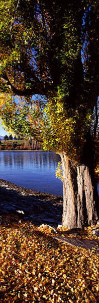 Fallen Leaf Lake Photograph - Banks Of Lake Wakatipu, Queenstown by Panoramic Images