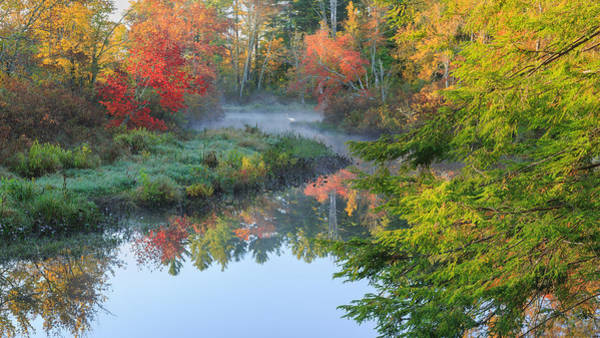 Trees In Fog Photograph - Bantam River Autumn by Bill Wakeley