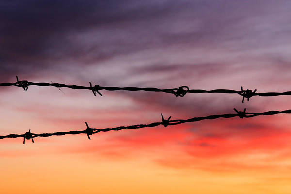 Wall Art - Photograph - Barbed Wire by Heather Kenward