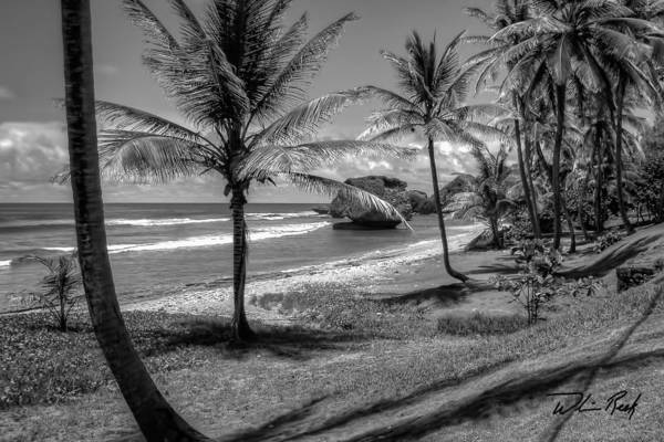 Photograph - Barbados Bw by William Reek