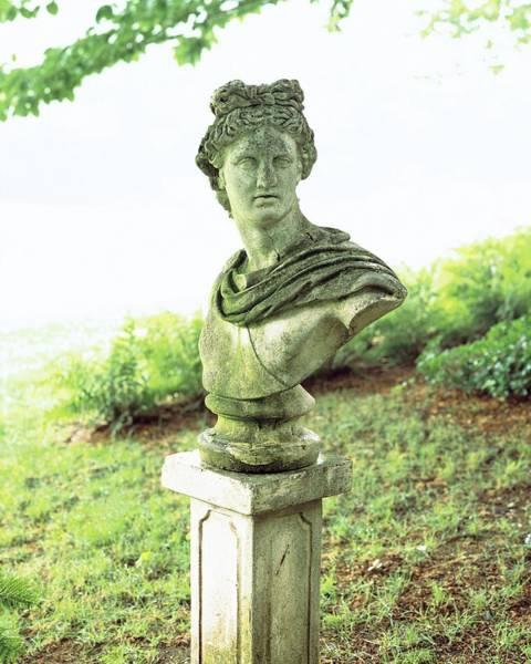 Lawn Photograph - Barbara Cirkva Bust Of Apollo by Dana Gallagher
