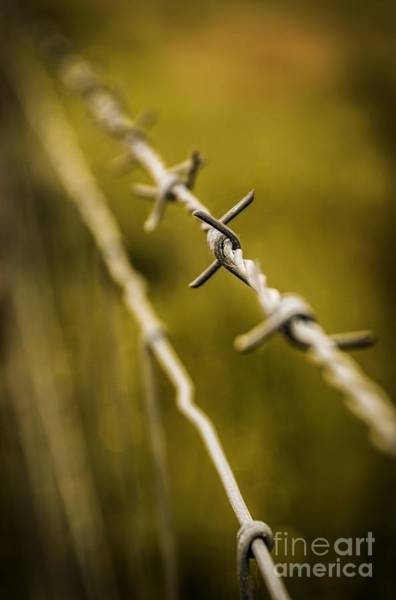 Iron Fence Wall Art - Photograph - Barbed Wire by Carlos Caetano