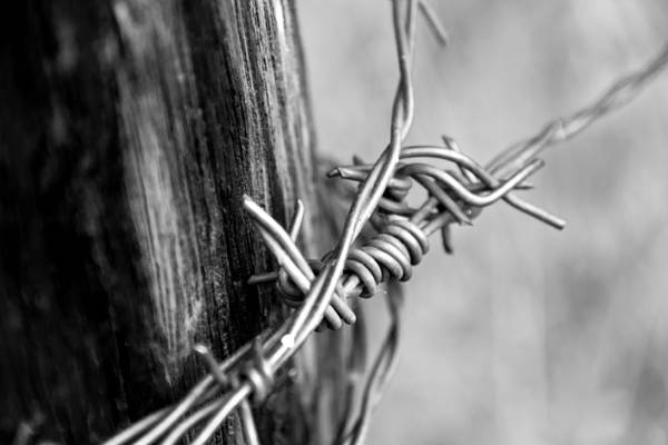 Fence Mixed Media - Barbed Bw by Angelina Tamez
