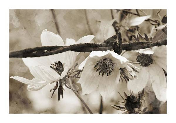 Wall Art - Photograph - Barbed Flowers by Alice Gipson