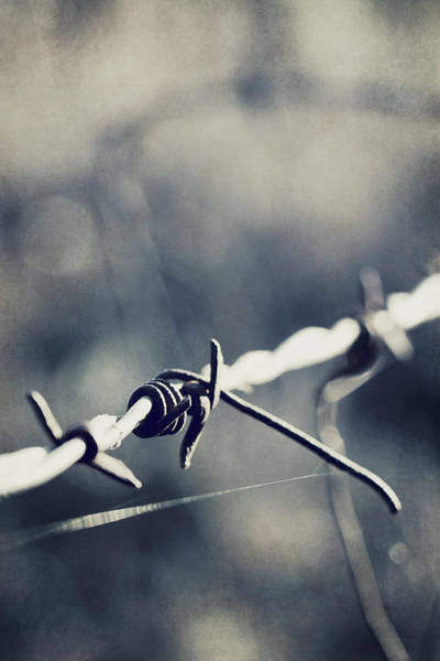 Wall Art - Photograph - Barbed by Trish Mistric