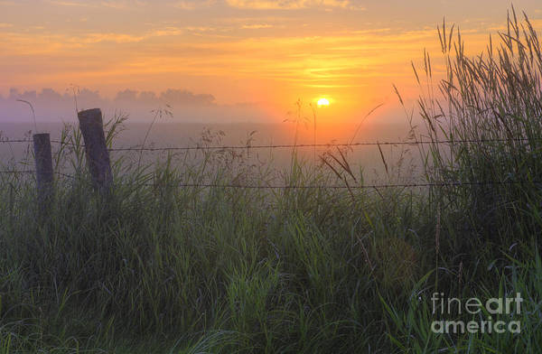 Barb Photograph - Barbed Wire And Tall Grasses At Sunrise by Dan Jurak