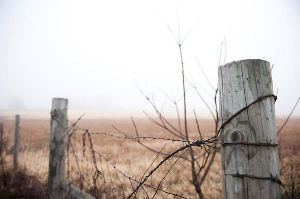 Photograph - Barbed Wire Fence In The Fog by Todd Aaron